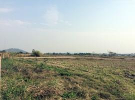12 rai just 15 minutes from Boonrawd Farm.