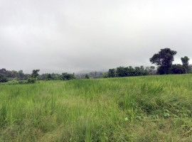 Almost 18 rai of gently sloping land just 2km from Singha Farm.