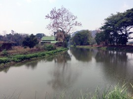 Land for sale in Chiang Rai: with huge potential