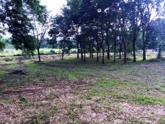 Land for sale in Chiang Rai: Almost 4 rai of prime land in Mae Yao.