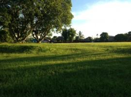Land for sale in Chiang rai: 9 rai in Chiang Khong
