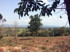 Land for sale in Chiang Rai: 14 Rai 1 Ngan 30 Tarangwa (Mae Lao)