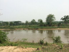 Land for sale in Chiang Rai:  26 rai 3 ngan (Kok river)