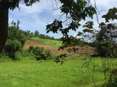 Land for sale in Chiang rai: 59 Rai(Mae Yao)