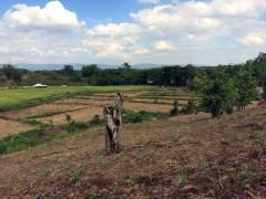 Land for sale in Chiang rai: 4Rai 3 Ngan 82 Tarangwa(Mae Lao)