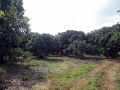 Land for sale in Chiang rai: 19 Rai, Mae Chan