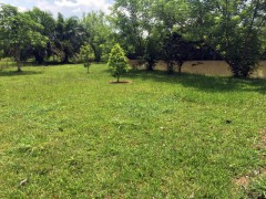 Land for sale in Chiang rai: 24 Rai ,Mae Kon (Sell all and by Plot)