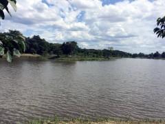 Land for sale in Chiang rai:1 Rai 2 Ngan 85 Tarangwa(Buffalo Hill)
