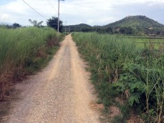 Land for sale in Chiang rai: 42 Rai, Buffalo Hill