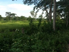 Land for sale in Chiang rai: 1 Rai 1 Ngan, Mae Yao.