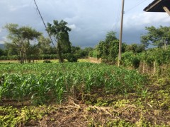 Land for sale in Chiang rai: 10 Rai or buy per plot, Mae Yao.