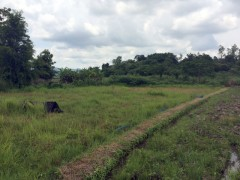 Land for sale in Chiang rai: 3-2-14 Tarangwa, Mae Yao.