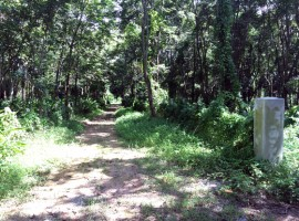 Land for sale in Chiang rai: Over 5 rai, San Sai.(Buy one or Buy all)