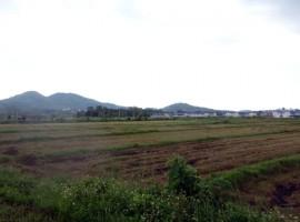 Land for sale in Chiang rai: 11 Rai, 55Mil, MFL University.