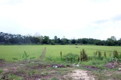Land for sale in Chiang rai: 20 Rai, 15 Mil per rai,