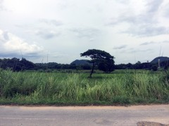 Land for sale in Chiang rai: 151 Rai, 1.2Mil per rai, Doi Hang.