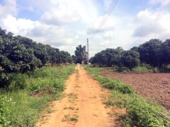 Land for sale in Chiang rai: 11 Rai, 35 Mil, Rimkok.