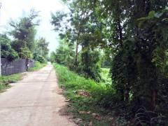 Land for sale in Chiang rai: 4 Rai 3 Ngan 54 Tarangwa, 1.2Mil, Mae Kon