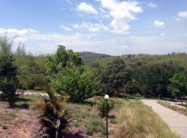Land for sale in Chiang rai: 7 Rai 2 Ngan 91 Tarangwa, Chiang saen.