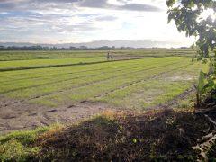 Land for sale in Phan: 14 Rai, 2.6Mil, Phan