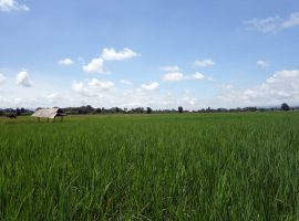 Land for sale in Chiang rai: 5 Rai 1 Ngan 3 Tarangwa, 4,000,000 Baht, Huay Sak, Chiangrai
