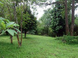 Land for sale in Chiang rai:  3 Ngan, 1.7 Million Baht, Mae Kon, Chiang Rai.