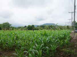 Land for sale in Chiang rai: 9 Million Baht, 4 Rai 1 Ngan 17 Tarangwa, Mae Kon, Chiang Rai.