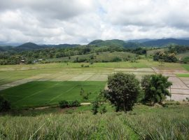 Land for sale in Chiang rai: 6 Rai 3 Ngan 79 Tarangwa, 6,947,500 Baht, Mae Yao.