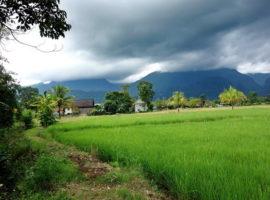 Land foe sale in Chiang rai: 8 Rai 81 Tarangwa, 8 Million Baht, Maesai, Chiang rai.