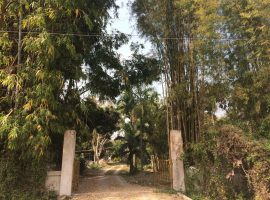 Land/House for sale in Chiang rai: 14 Rai, 20 Million, Muang Chiangrai, Rimkok, Chiangrai.