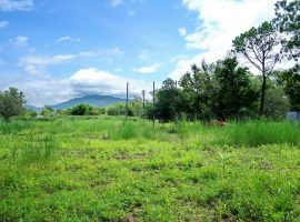 land for sale in Chiang rai: 1 Rai 51 Tarangwa,1.6 Million Baht, Mae Yao.