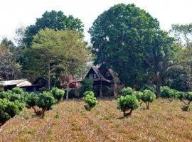 ให้เช่าบ้านบนเขาแวดล้อมไปด้วยป่าและสวนผลไม้ นางแล เชียงราย: 2 ห้องนอน, 8,000 บาท/เดือน