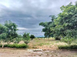 ขายที่ดิน ใกล้วัดร่องขุ่น ป่าอ้อดอนชัย เชียงราย : เนื้อที่ 1 ไร่ 1 งาน 17.0 ตารางวา, 4 ล้านบาท